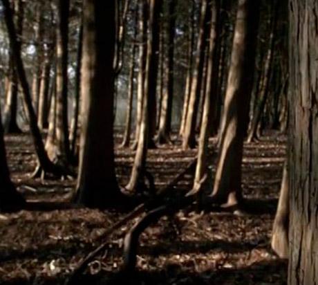 """Northumbria """"Black Sea of Trees"""" (video)"""