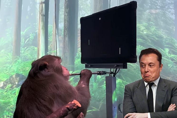 Elon Musk Now Got a Monkey to Play 'Pong' with Its Mind