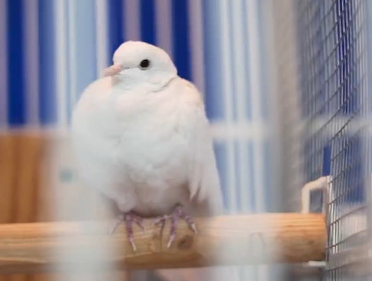 Prince's Beloved Pet Dove Divinity Has Died