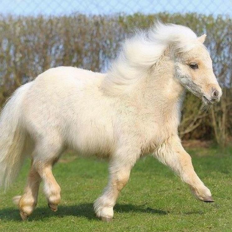 """Ginuwine """"Pony"""" (Rustie remix)"""