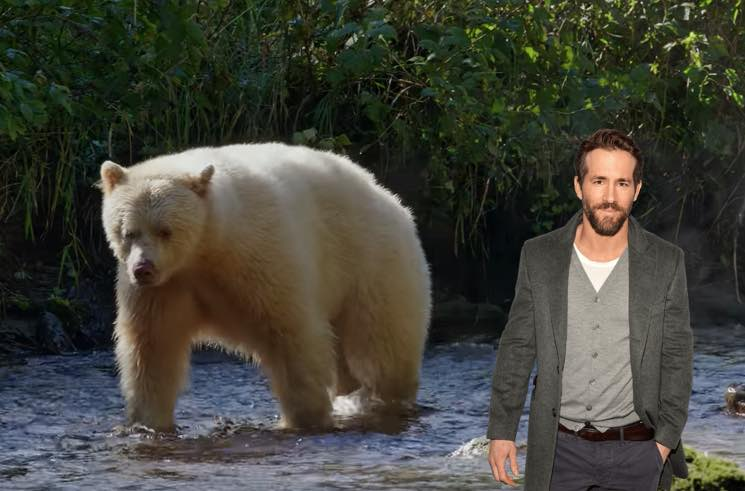 ​Ryan Reynolds Is Narrating an IMAX Film About B.C.'s Great Bear Rainforest