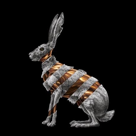San Fermin Announce 'Jackrabbit' LP, Premiere New Song