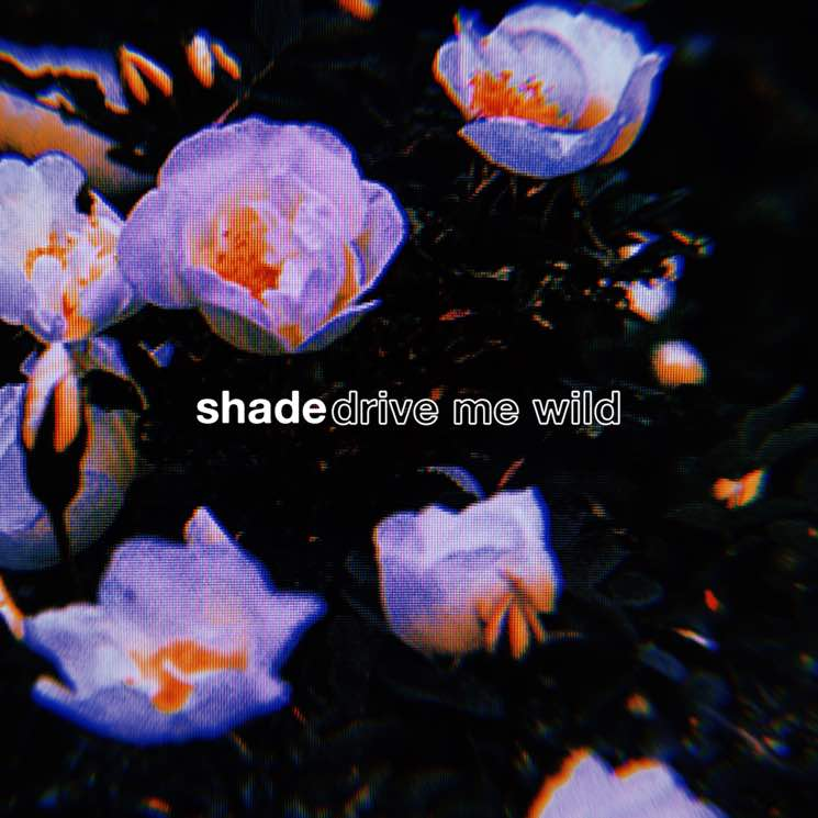 "Shade Premiere ""Drive Me Wild"" Video"