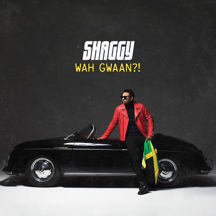 Shaggy Wah Gwaan?