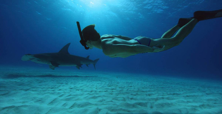 'Sharkwater Extinction' Continues Rob Stewart's Legacy