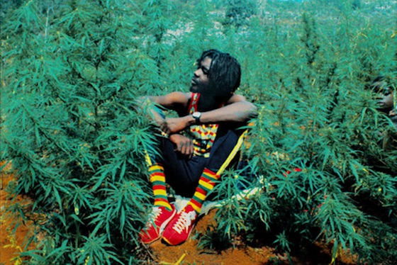 Peter Tosh's Family Celebrate 4/20 with Launch of Weed Company