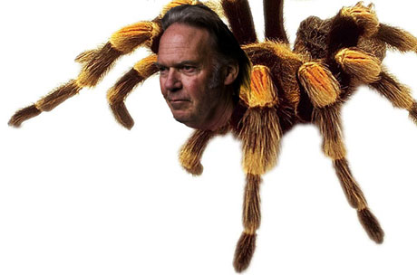New Species of Spider Named After Neil Young