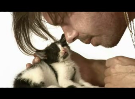 Watch Out! Liars Play With Kittens in New Video