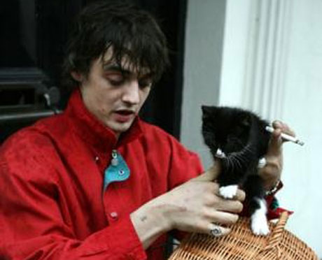 Pete Doherty's Kitten Addicted to Crack