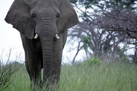 Elephant Tales Mario Andreacchio