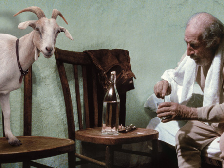 The Four Times (Le Quattro Volte) Michaelangelo Frammartino