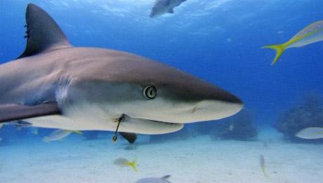 Sharkwater Rob Stewart