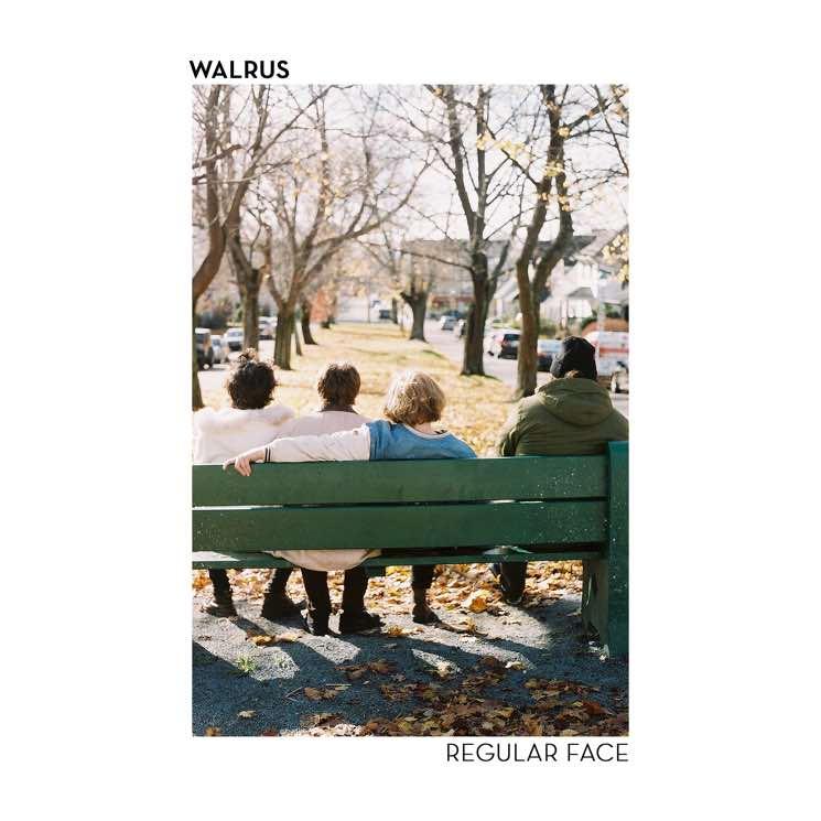 """Walrus """"Regular Face"""""""