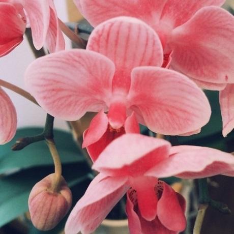 Michael Uzowuru 'Pink Orchids' (EP stream)