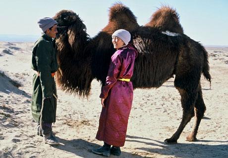 The Story Of The Weeping Camel Byambasuren Davaa and Luigi Falorni