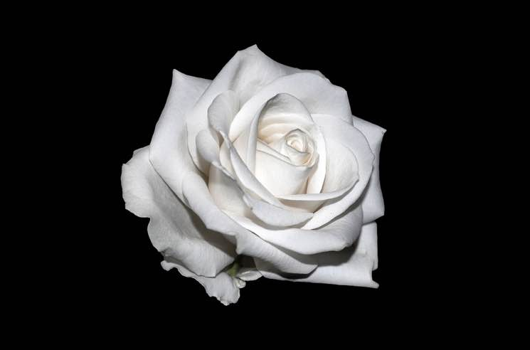 Kelly Clarkson, Halsey, Cyndi Lauper to Wear White Roses to the Grammys in Support of Time's Up