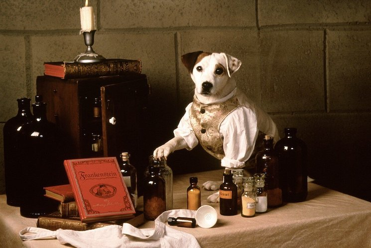 New Live-Action 'Wishbone' Movie in the Works