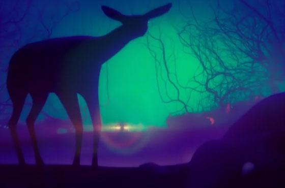 Yardlets 'Baby Deer' (video)