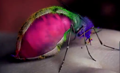 "Yeah Yeah Yeahs ""Mosquito"" (video)"