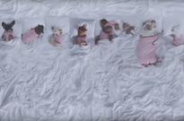 Watch These Cuddly Dogs Parody Kanye West's