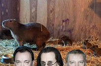 ​Toronto Capybaras Officially Named After Members of Rush