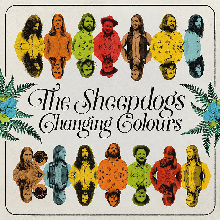 Image result for sheepdogs changing colours