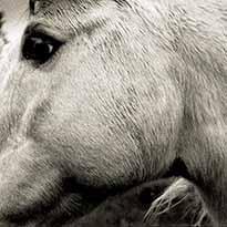 Bonny Light Horseman Bonny Light Horseman