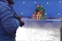 ​'A Dog's Purpose' Accused of Animal Abuse on Film Set