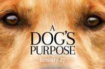 'A Dog's Purpose' Premieres Cancelled over Animal Abuse Controversy