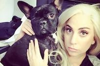 Thieves Shot Lady Gaga's Dog Walker and Kidnapped Her Dogs