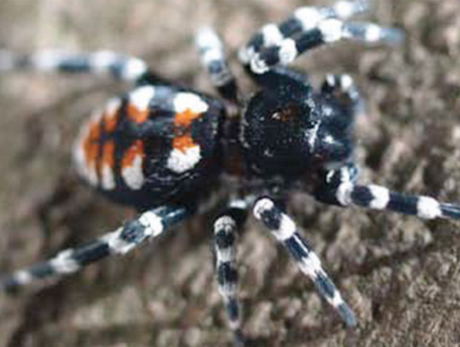 Newly Discovered Spider Named After Lou Reed