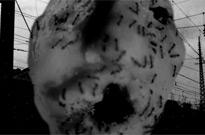 David Lynch Shares 'Ant Head' Short Film