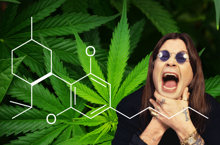 Ozzy Osbourne Is Treating His Health Issues with CBD Oil - 웹