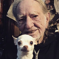 Willie Nelson Is Making CBD Products for Pets